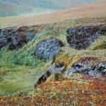 Весенний ковёр в тундре 150x150 - Пейзажи