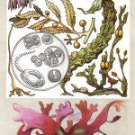 Водоросли пионеры Земли 150x150 - Удивительные растения