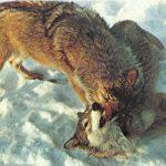 Волки  150x150 - Другие животные