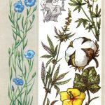 Волокнистые растения 150x150 - Удивительные растения