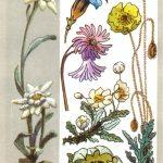 Высокогорные растения 150x150 - Удивительные растения
