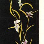 Гаврилова Е. Цикламены 150x150 - Цветы