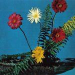 Гербера с папоротником 150x150 - Цветы