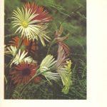 Гербера 150x150 - Цветы