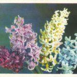 Гиацинты 1 150x150 - Цветы