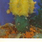 Гимнокалициум Михановича жёлтый 150x150 - Цветы