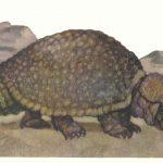 Глиптодонт  150x150 - Другие животные