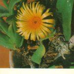 Глотифиллюм душистый 150x150 - Цветы