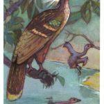 Гоацин 150x150 - Птицы