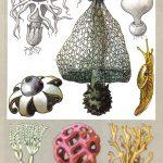 Грибы цветы 150x150 - Удивительные растения