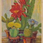 Группа цветущих кактусов рис. 150x150 - Цветы