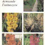 Декоративные растения. Откр. 001 150x150 - Цветы