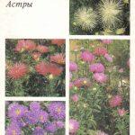Декоративные растения. Откр. 002 150x150 - Цветы