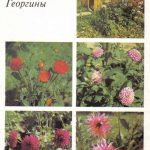 Декоративные растения. Откр. 003 150x150 - Цветы