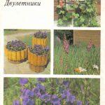 Декоративные растения. Откр. 004 150x150 - Цветы