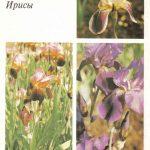Декоративные растения. Откр. 005 150x150 - Цветы