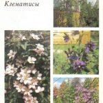 Декоративные растения. Откр. 006 150x150 - Цветы