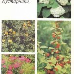 Декоративные растения. Откр. 007 150x150 - Цветы