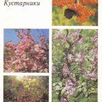 Декоративные растения. Откр. 008 150x150 - Цветы