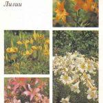 Декоративные растения. Откр. 010 150x150 - Цветы