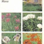 Декоративные растения. Откр. 011 150x150 - Цветы