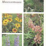 Декоративные растения. Откр. 012 150x150 - Цветы
