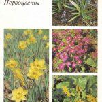 Декоративные растения. Откр. 013 150x150 - Цветы