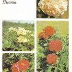 Декоративные растения. Откр. 014 150x150 - Цветы
