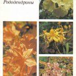 Декоративные растения. Откр. 015 150x150 - Цветы