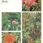 Декоративные растения. Откр. 016 150x150 - Цветы