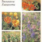 Декоративные растения. Откр. 017 150x150 - Цветы