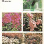 Декоративные растения. Откр. 018 150x150 - Цветы