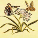 Деталь вышивки на китайской шали  150x150 - Бабочки
