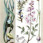 Добрые помощники 150x150 - Удивительные растения