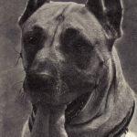 Дог 150x150 - Собаки чёрно-белые
