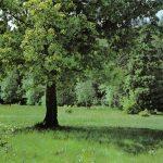 Дубовая роща 150x150 - Пейзажи