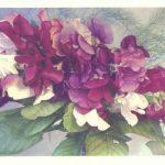 Душистый горошек 1 150x150 - Цветы