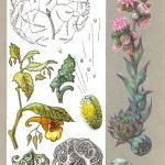 Заботливые растения 150x150 - Удивительные растения