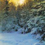 Закат над лесом 150x150 - Пейзажи