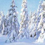 Заснеженные ели 150x150 - Пейзажи