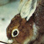 Заяц  150x150 - Другие животные