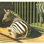 Зебры 150x150 - Ленинградский Зоопарк