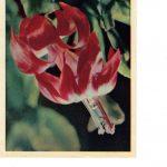 Зигокактус 150x150 - Цветы