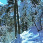 Зимнее солнце 150x150 - Пейзажи