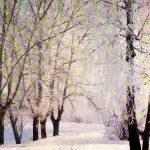 Зимний лес 1 150x150 - Пейзажи