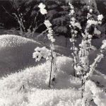 Зимний пейзаж 5 150x150 - Пейзажи