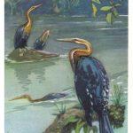 Змеешейка 150x150 - Птицы