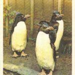 Золотоволосые пингвины 150x150 - Птицы