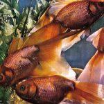 Золотой вуалехвост 150x150 - Аквариумные рыбки