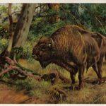 Зубробизон  150x150 - Другие животные